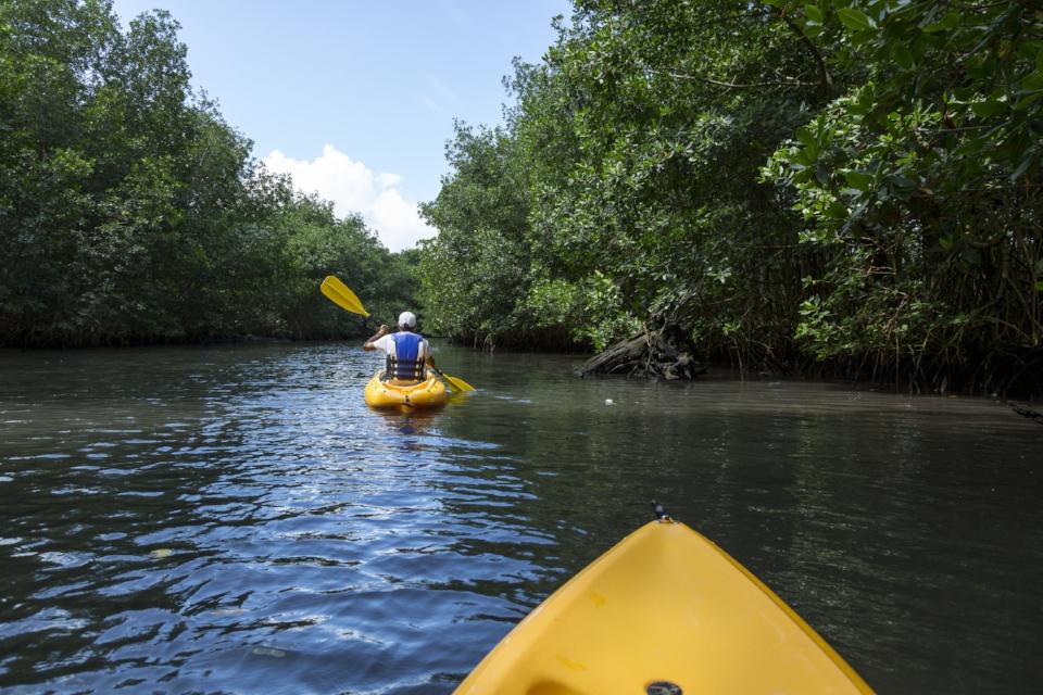 Kayaking through mangroves_High Res_8153.jpg
