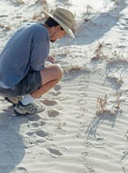 tracking in sand
