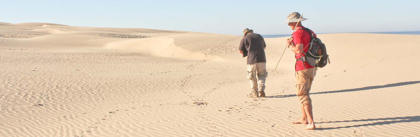 Two trackers follow a trail in the dunes along the California coast.