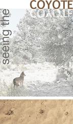 Beginner tracker stories seeing the coyote
