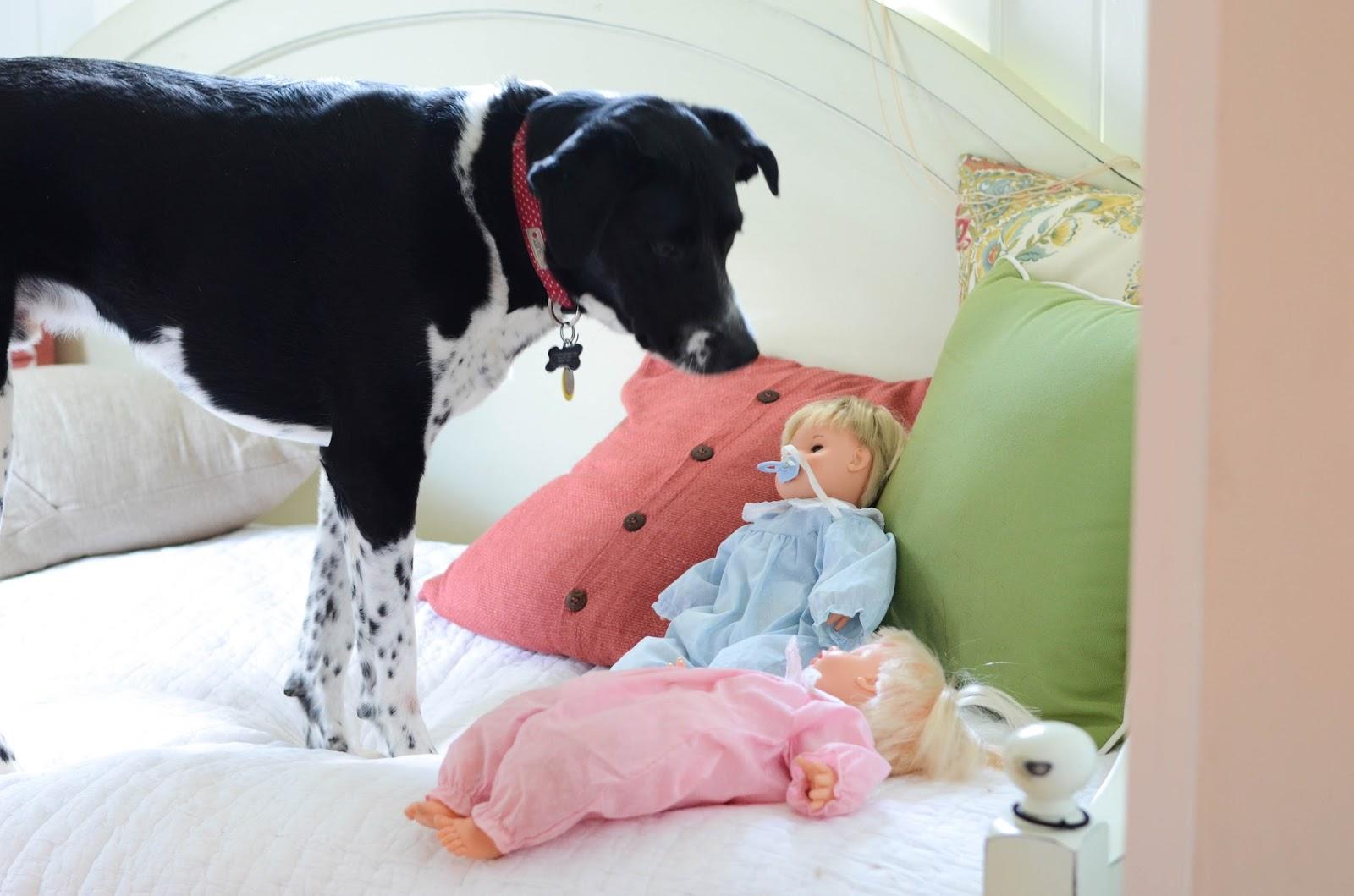 Preparing+Dog+For+Baby,+Newborn+(9).jpg
