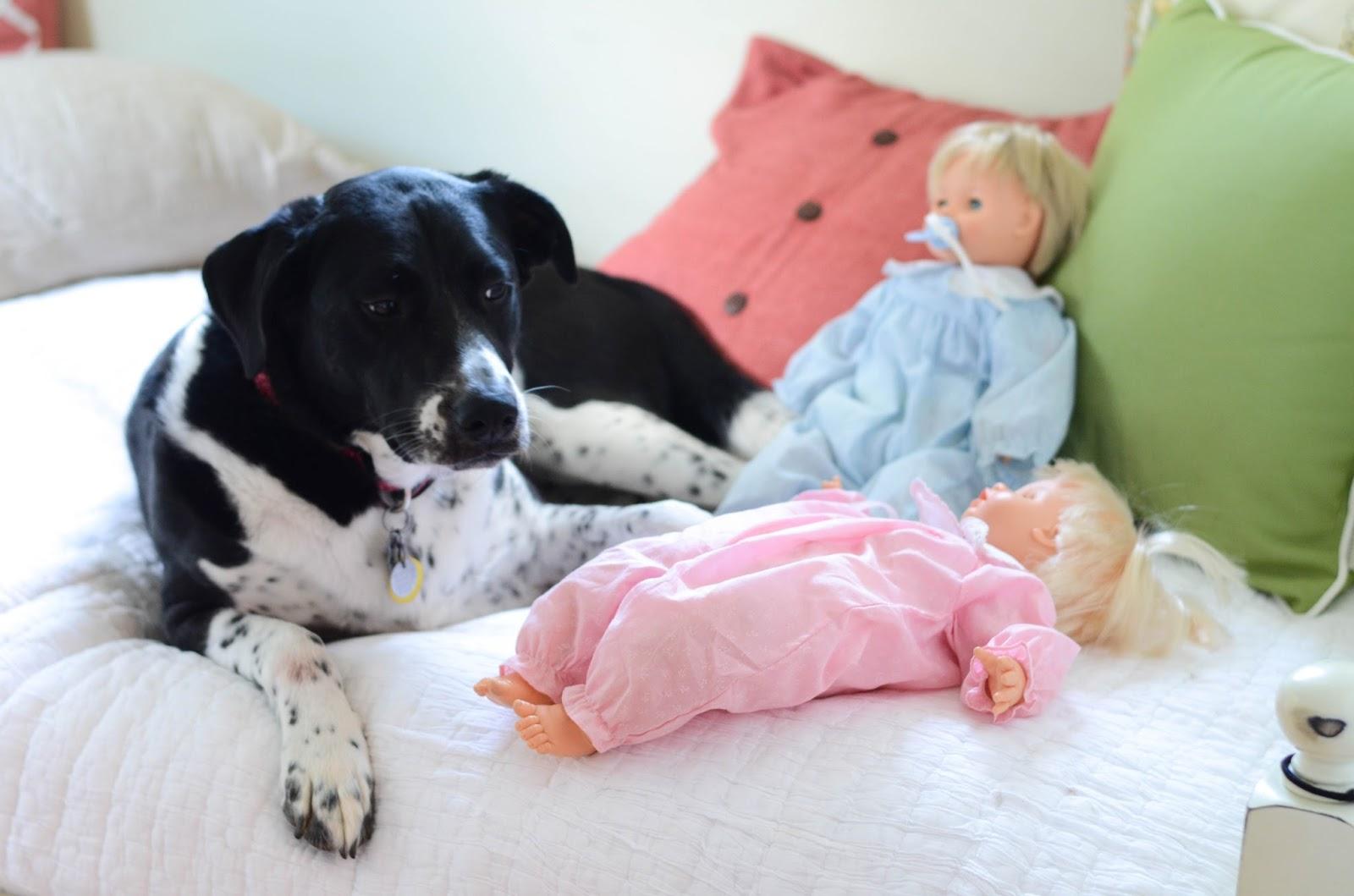 Preparing+Dog+For+Baby,+Newborn+(8).jpg