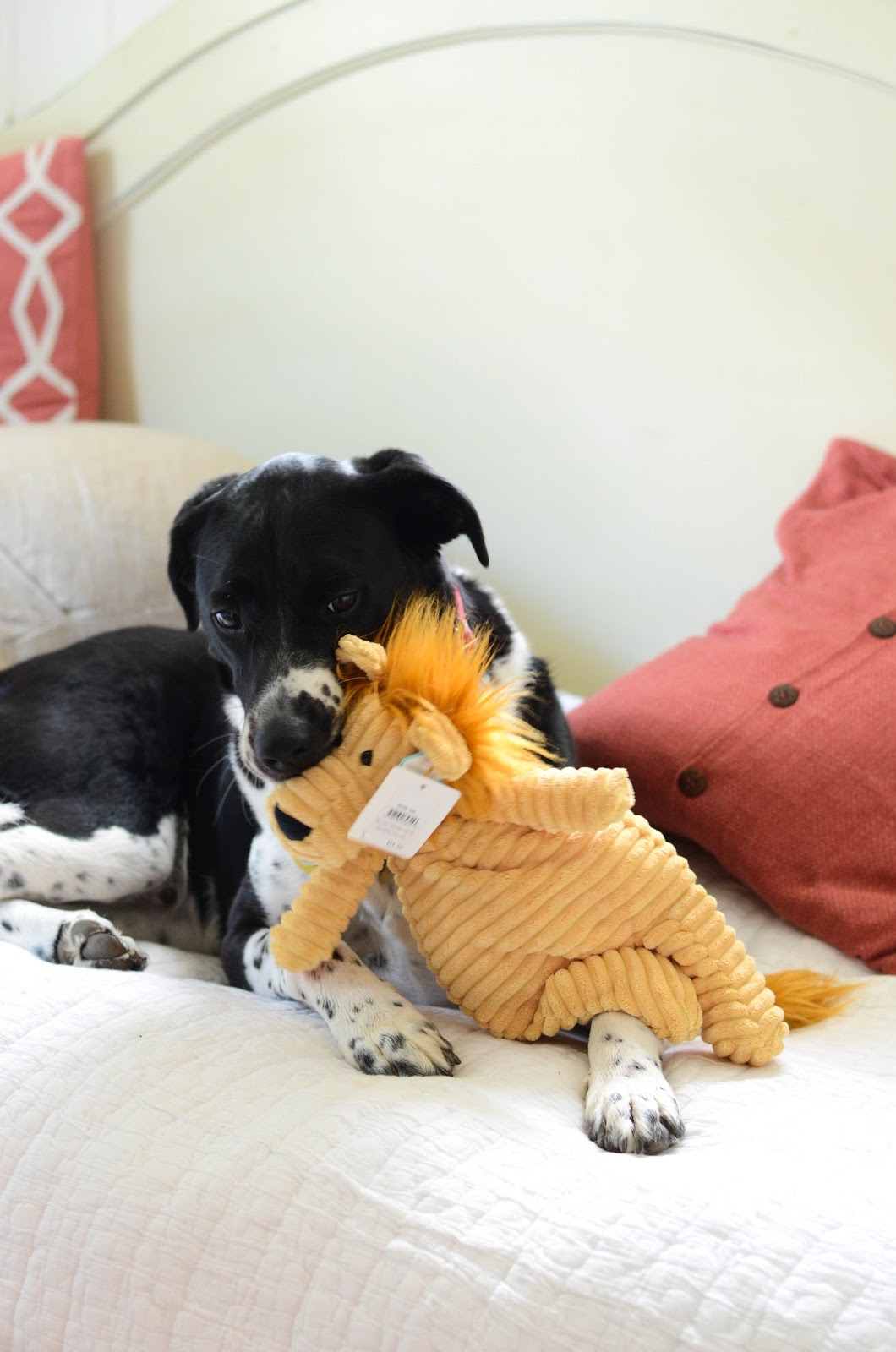 Preparing+Dog+For+Baby,+Newborn+(5).jpg