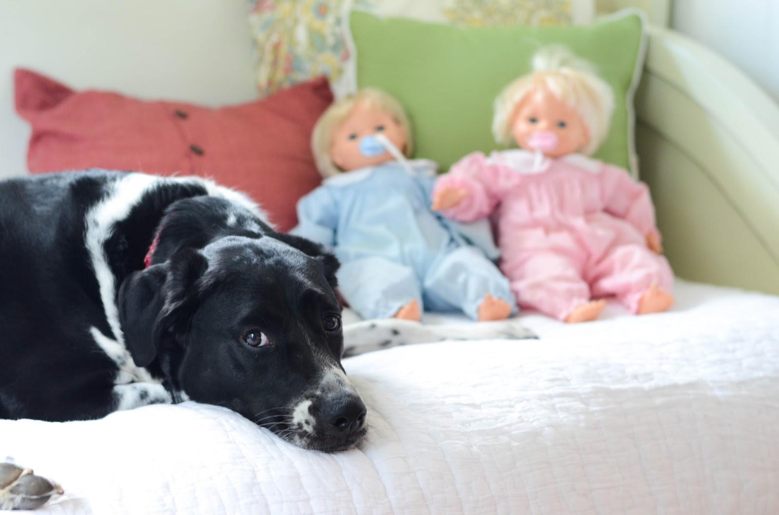Preparing+Dog+For+Baby,+Newborn+(12).jpg