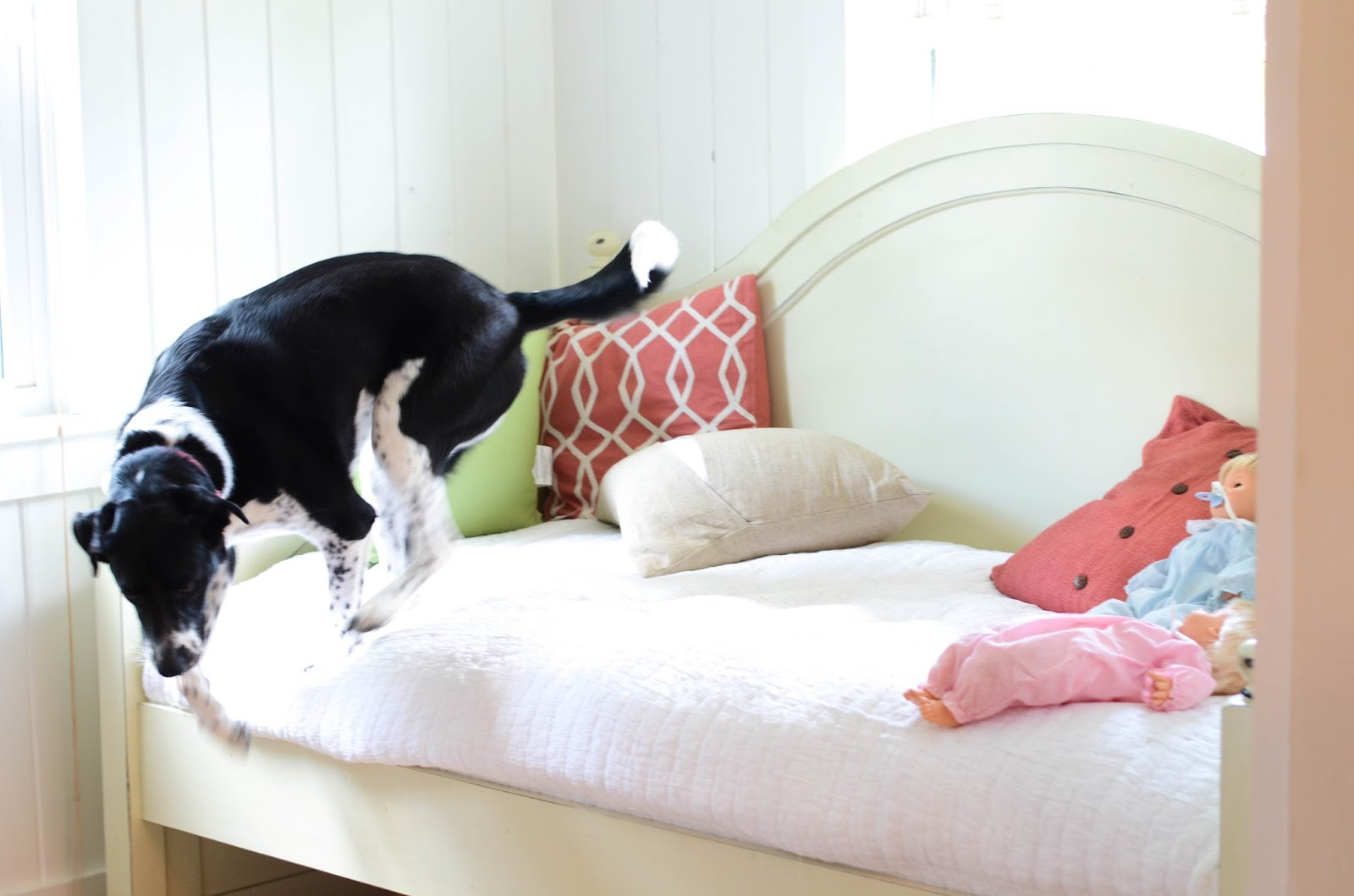 Preparing+Dog+For+Baby,+Newborn+(10).jpg