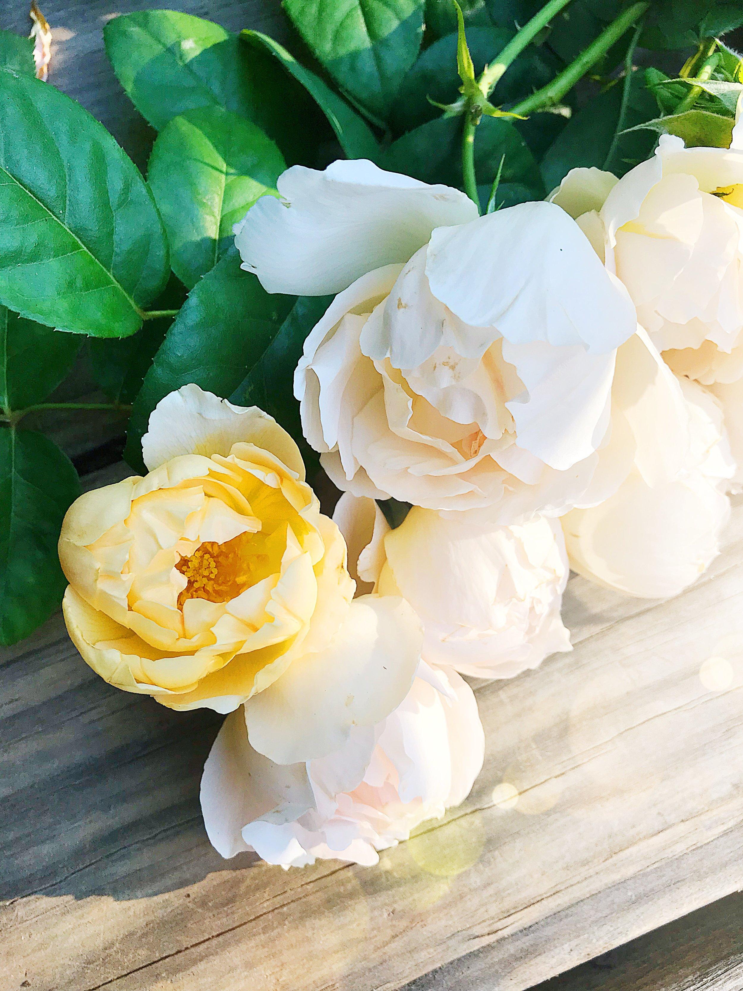 Comte de Champagne Rose