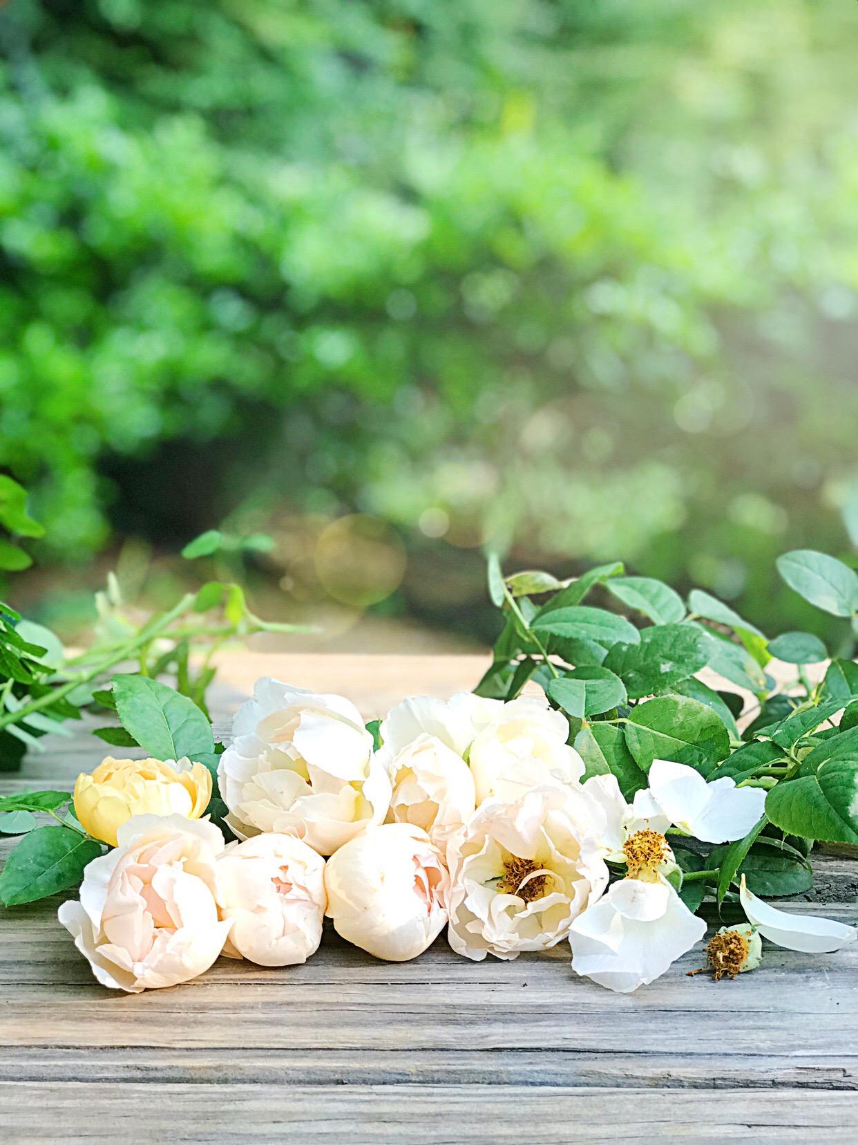 Comte de Champagne Roses
