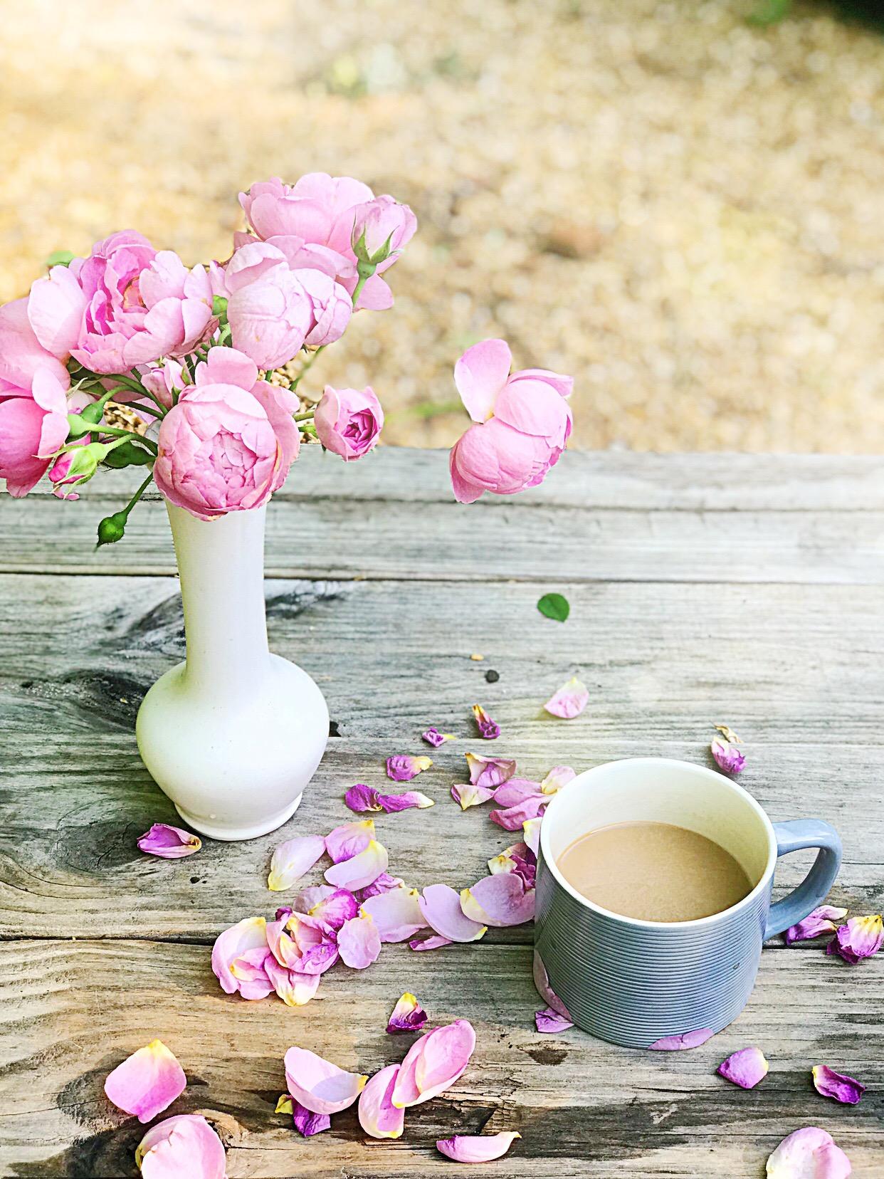David Austin Roses Royal Jubilee Rose