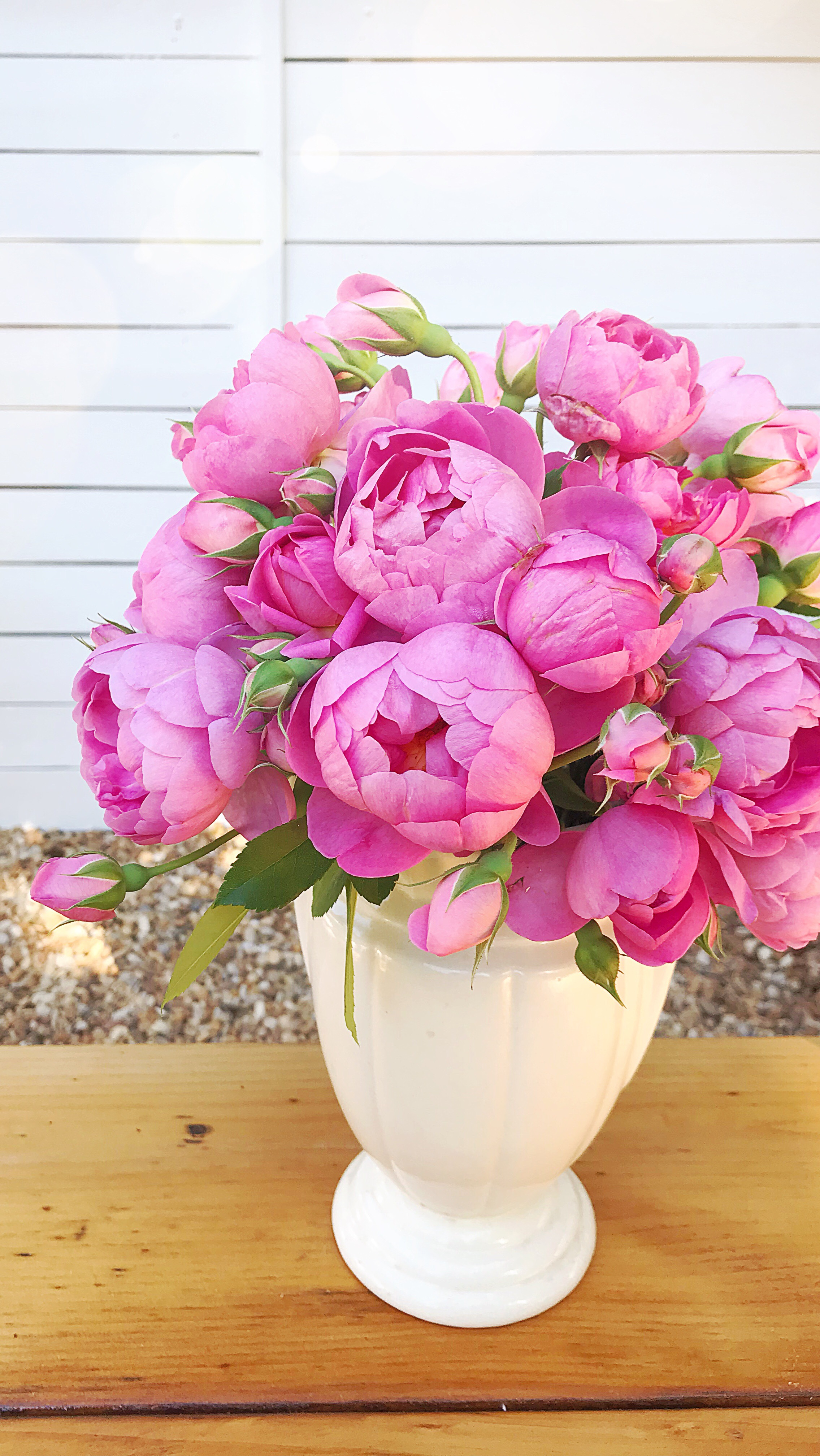 Royal Jubilee Rose