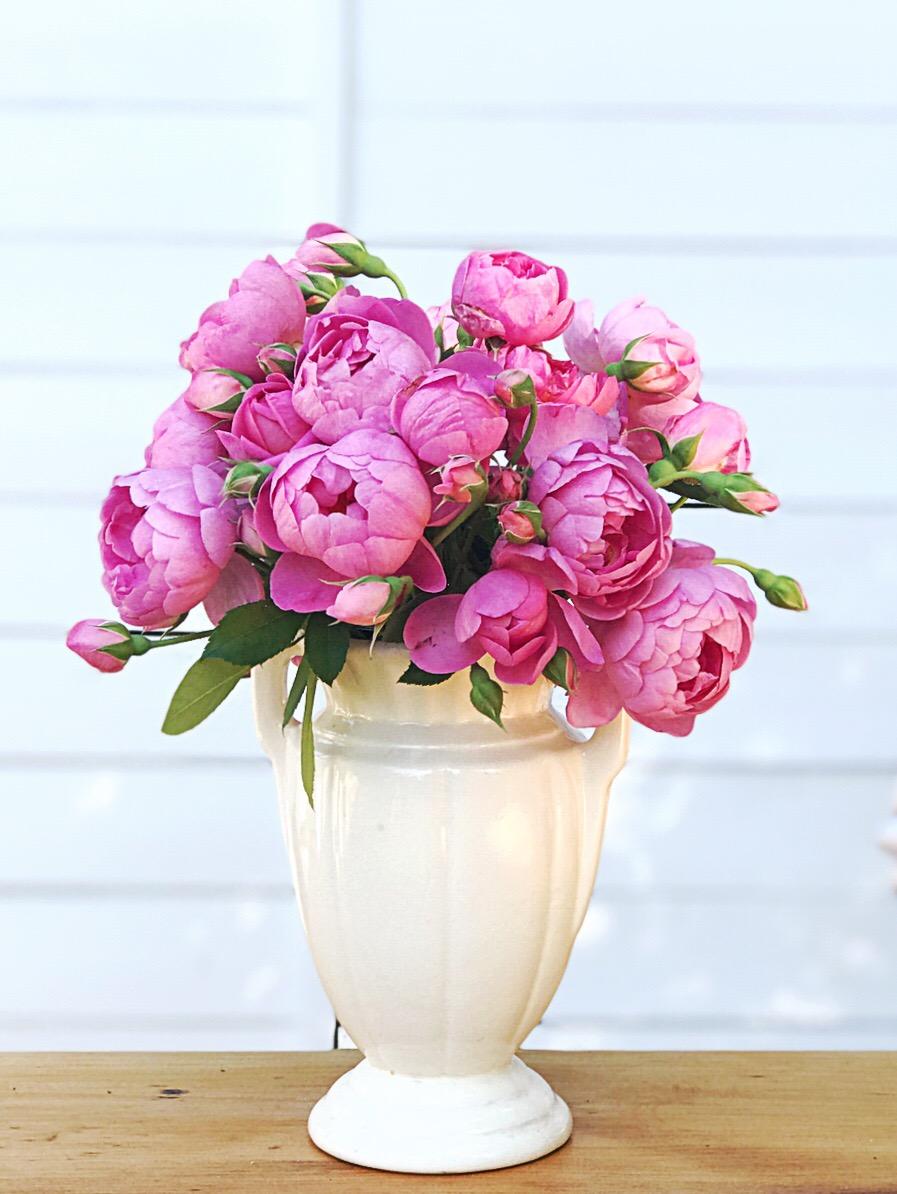 Royal Jubilee Roses