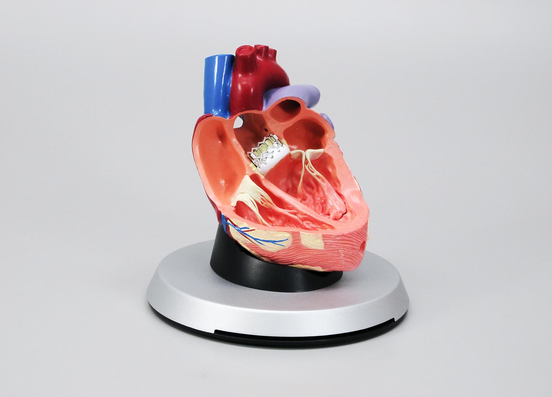 © 2014 GPI Anatomicals