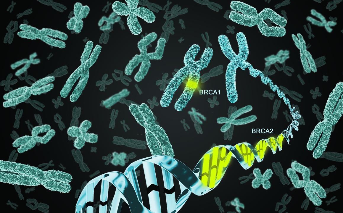 Chromosomes and BRCA gene