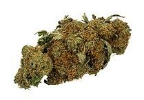 320px-Marijuana-Cannabis-Weed-Bud-Gram.jpg