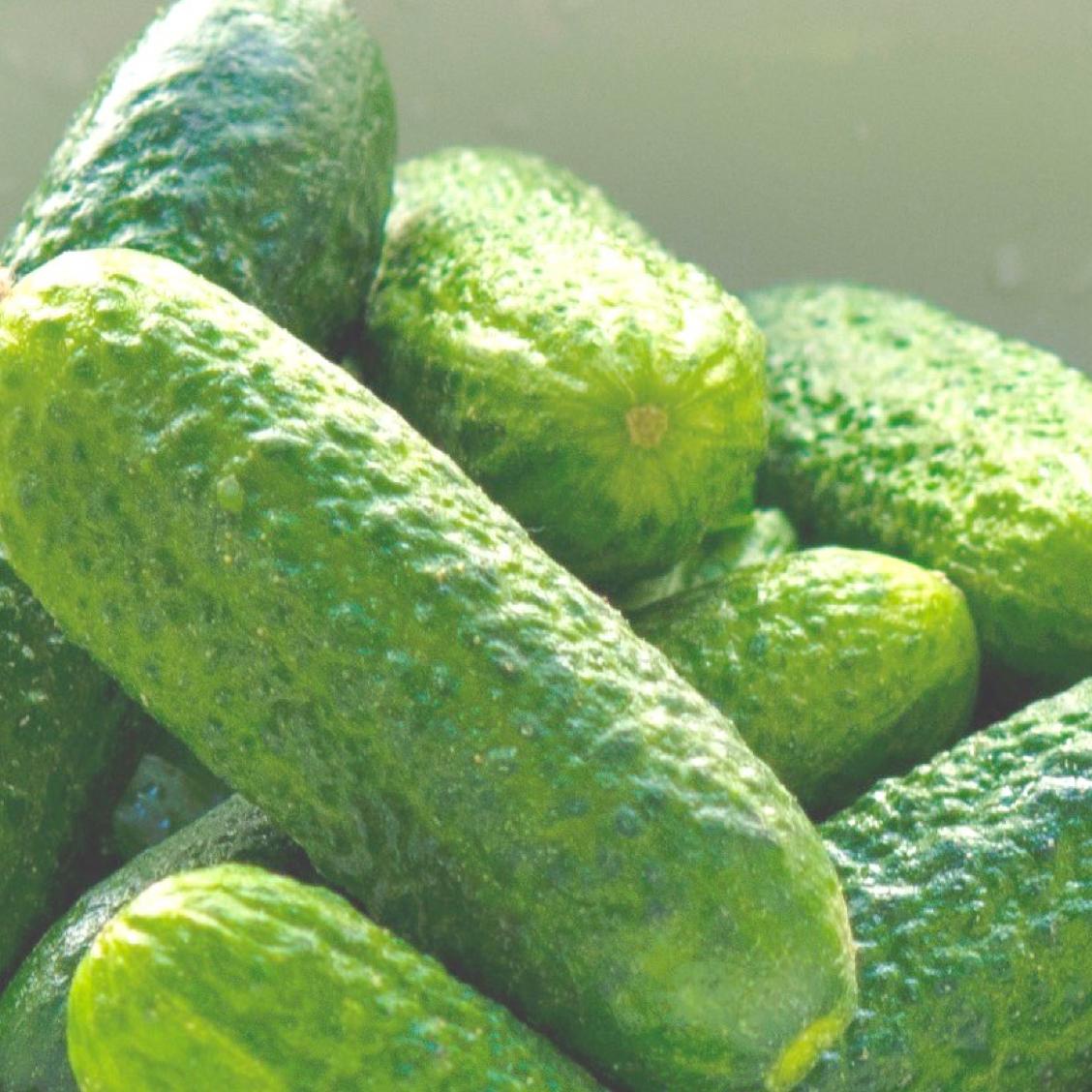 pickle.001.jpeg
