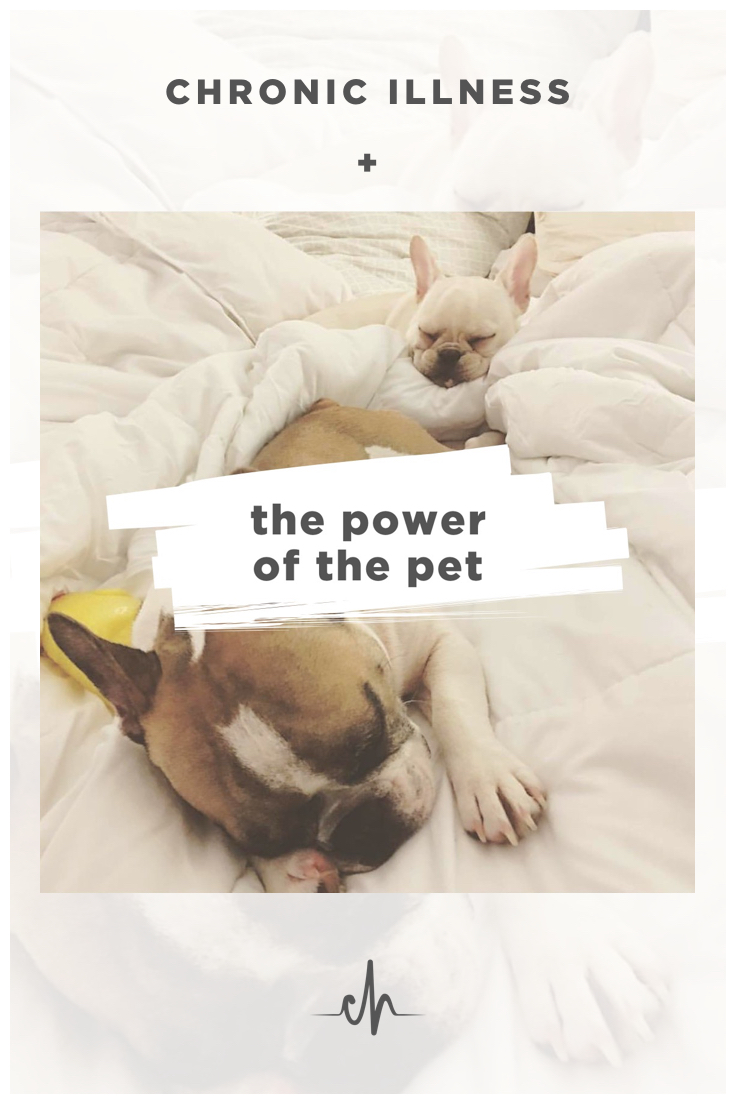 power-of-pets-chronically-healthy-blog