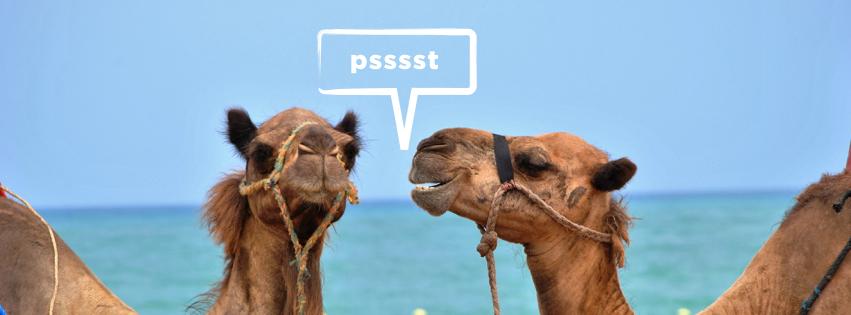 Chronically-Us-Camel.001.jpeg