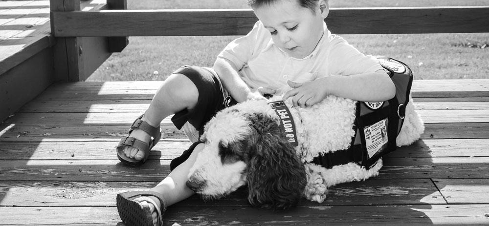 Service Dogs -