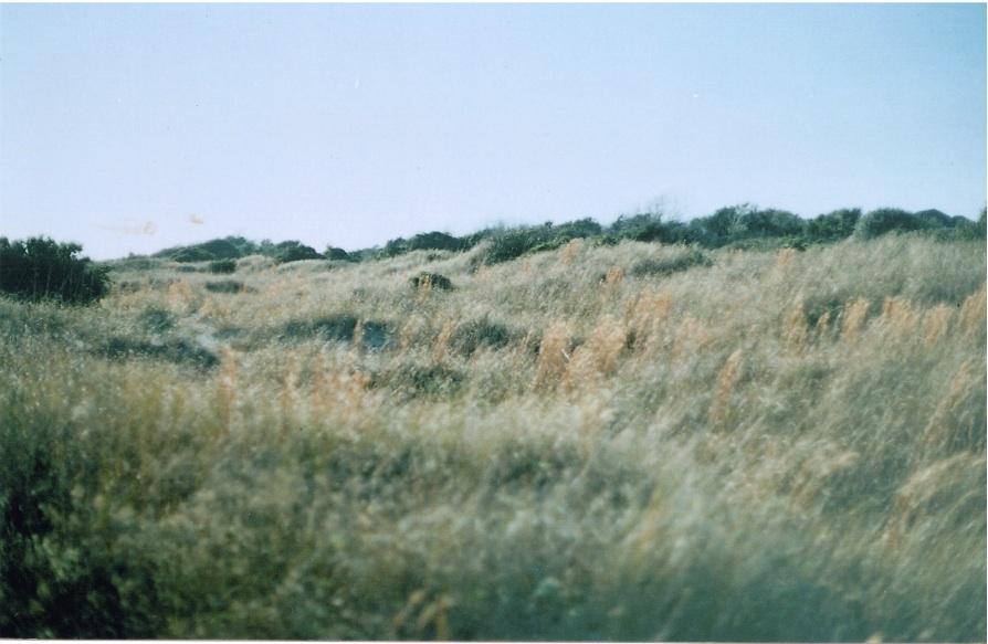 mellamoiris :     windy