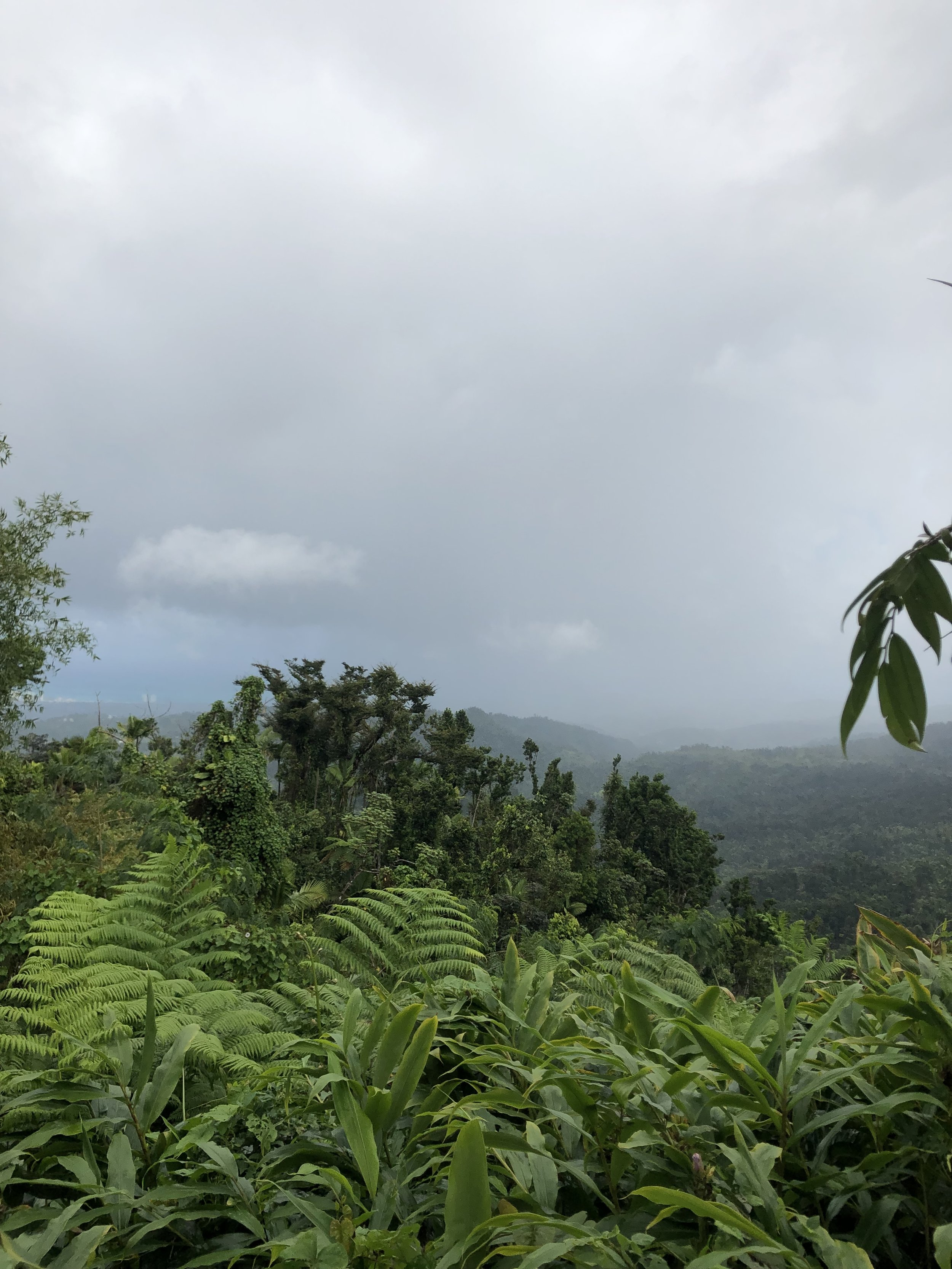 A view from the Yucatán Rainforest- you can see the beach from here on the left!