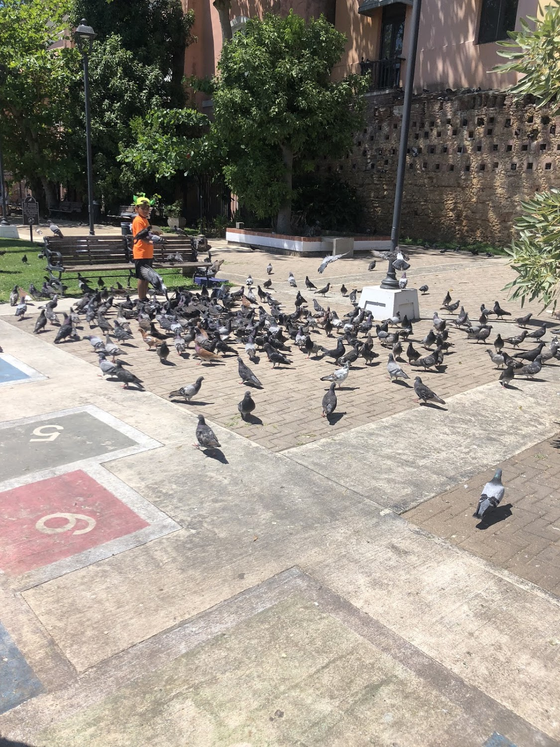 This is the pigeon park in Old San Juan. The pigeons here are so used to humans that they don't even fly away unless you get very close them them! One even landed on Becca Lamb's shoulder!