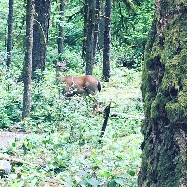 The scene at #oxbowpark for Sunday's run. Day 28!  #rwrunstreak #rwrunstreak2019 #portlandrunner #nwrunner #runnersofinstagram #instarunners #runstagram #trailrunning #runnersworld #brooksrunning #runlikeamother #veganrunner #runstreak #whateverittakes
