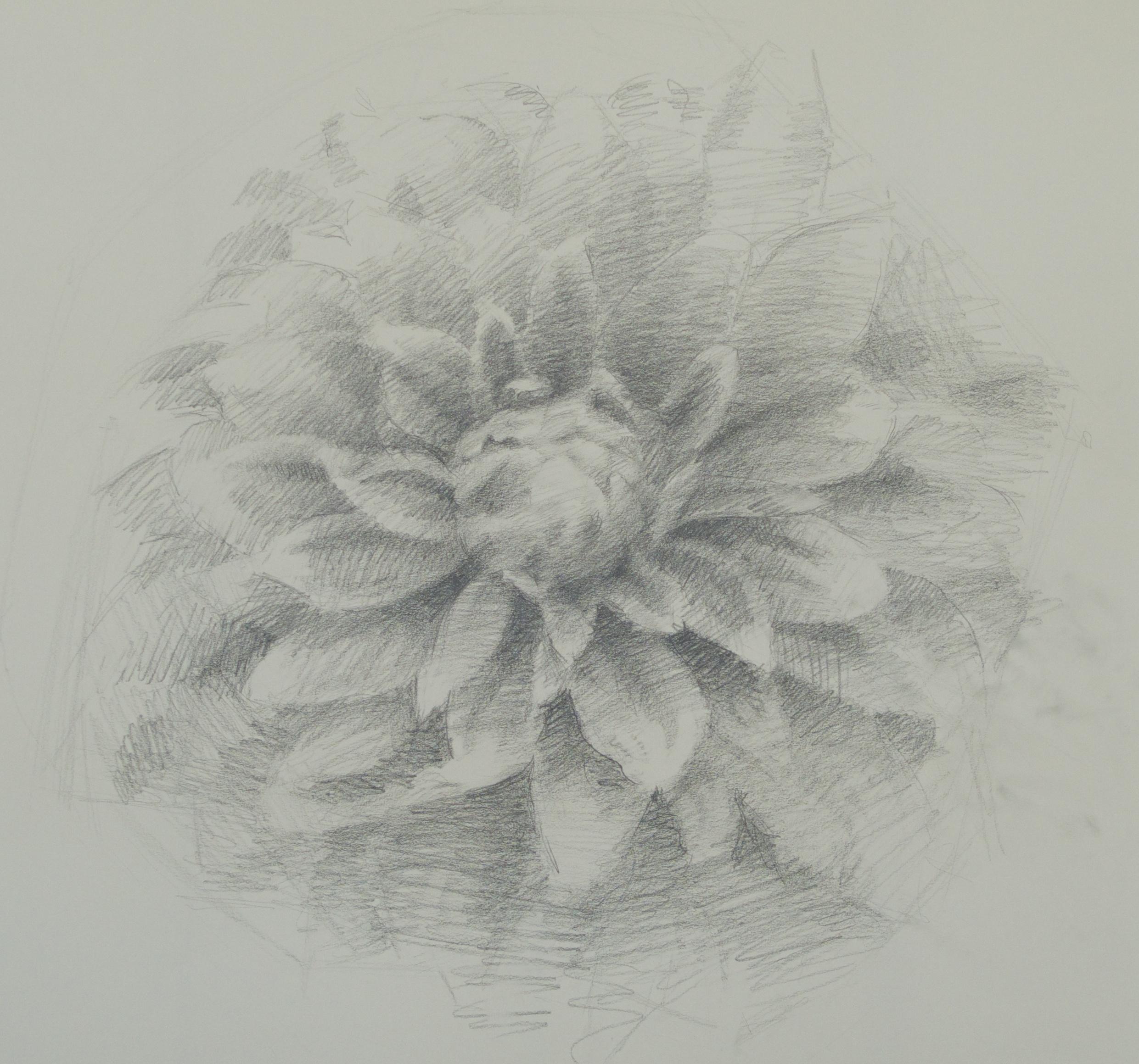 Dahlia Study (Karma Yin-Yang)