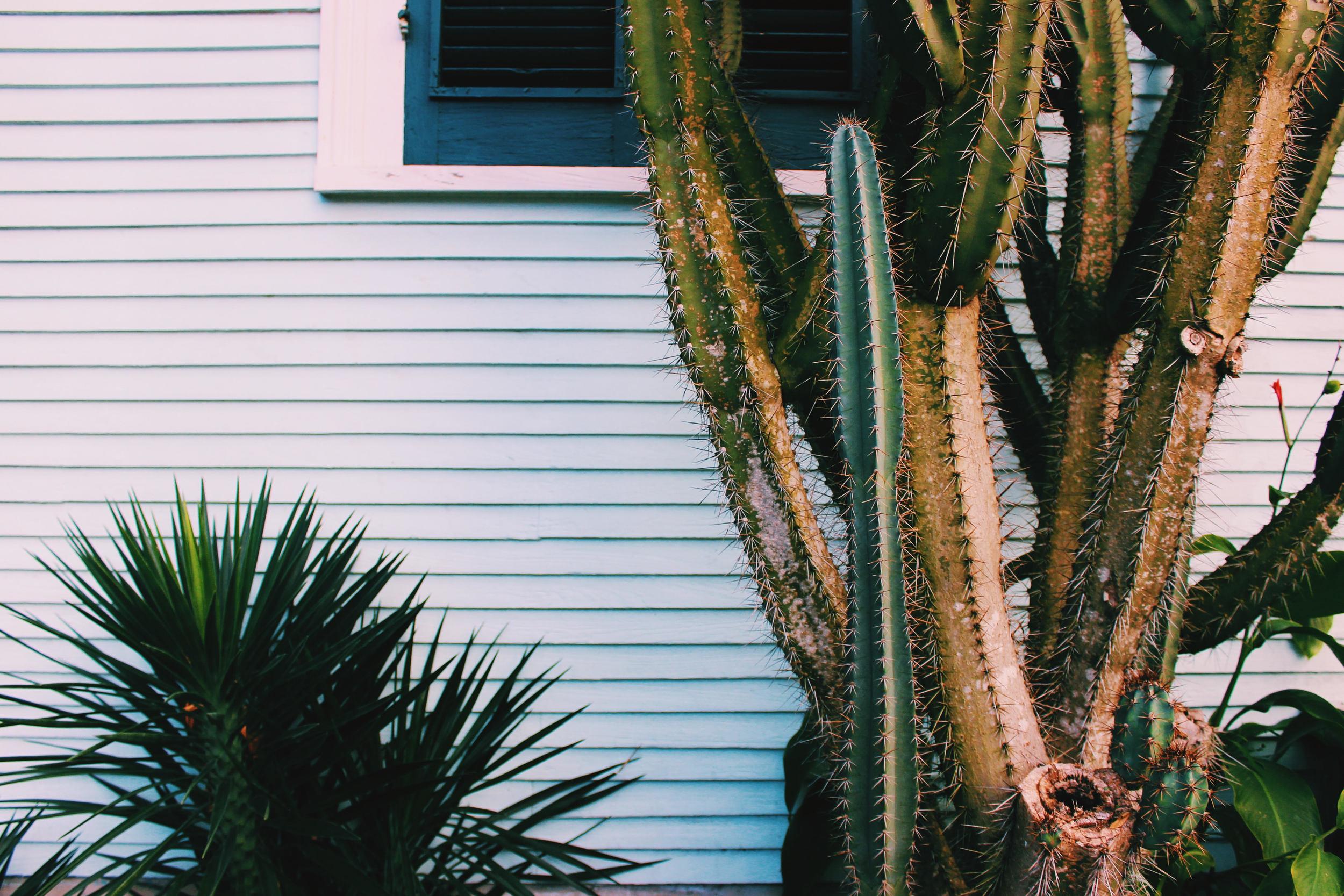 cactus home: ouiwegirl.com
