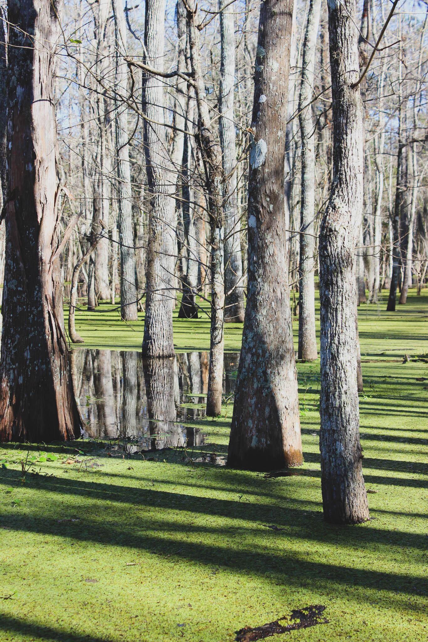 Honey Island Swamp | New Orleans
