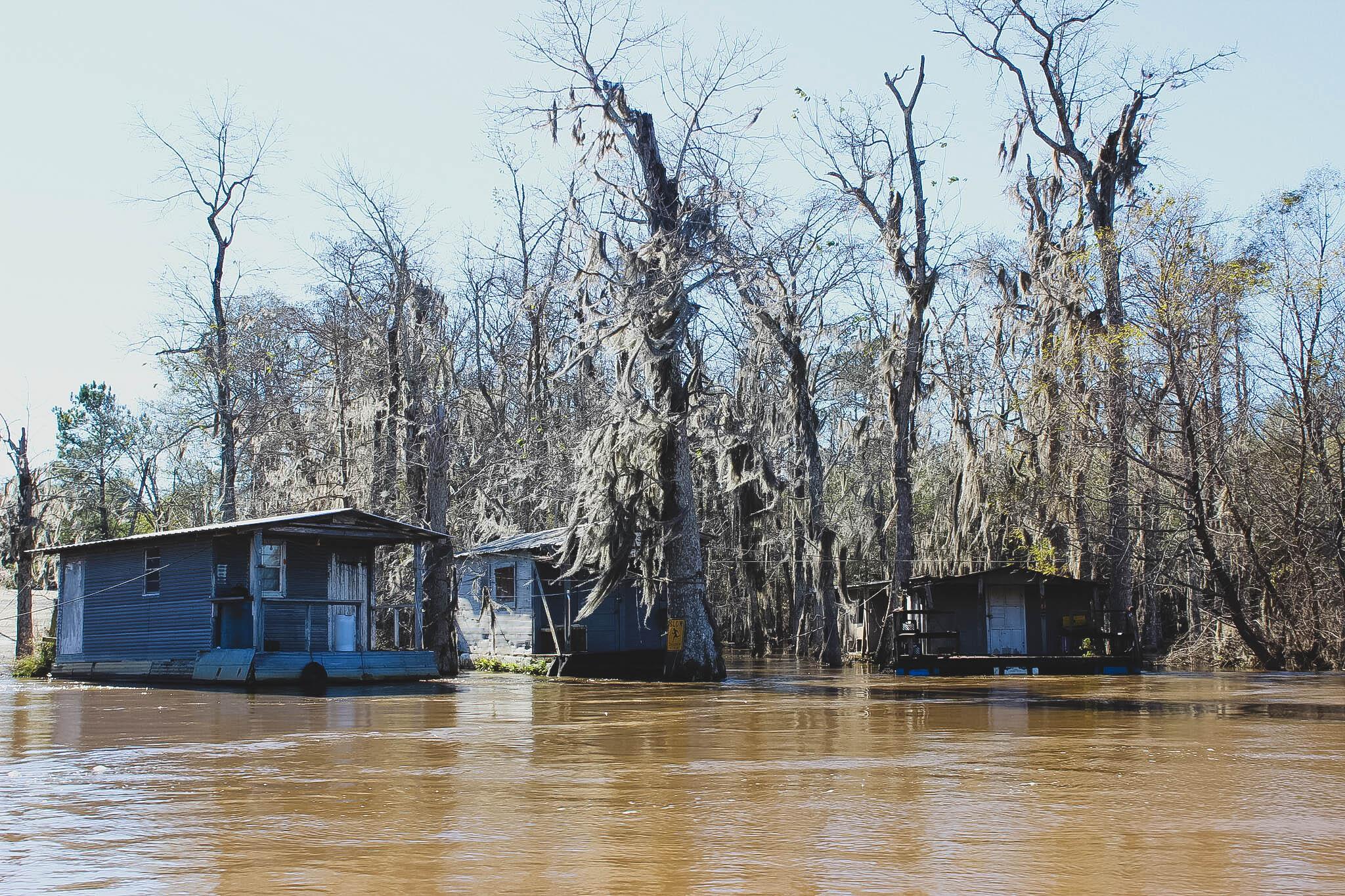 honey island swamp : ouiwegirl.com
