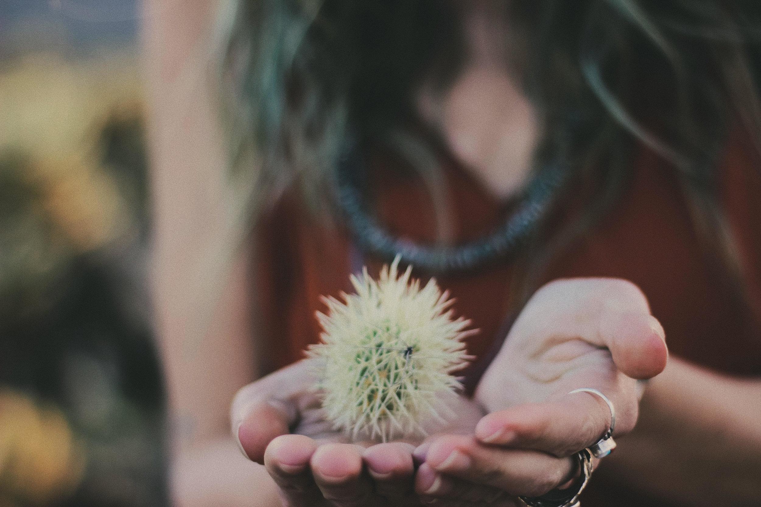 Joshua Tree Cactus x Oui We