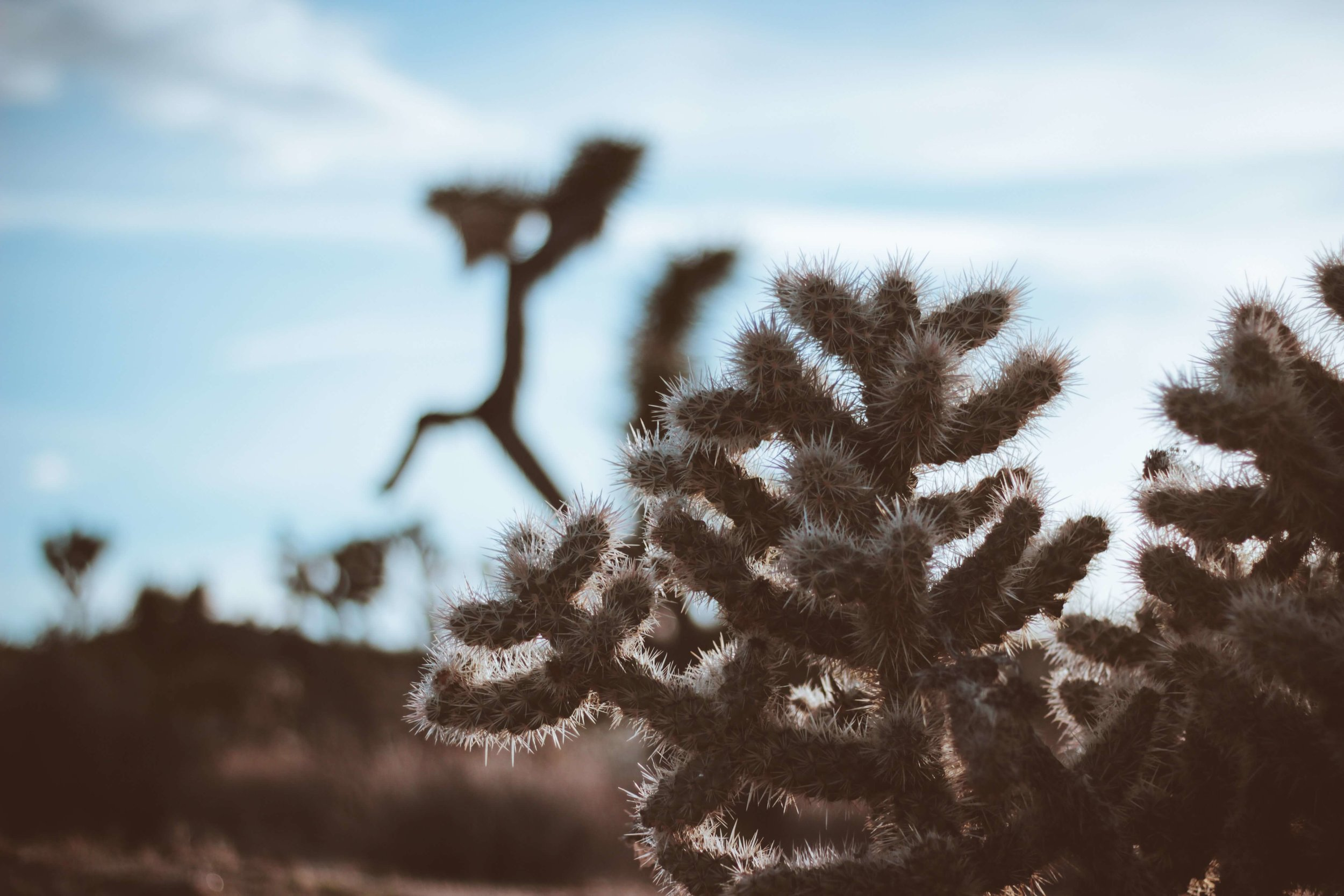 Joshua Tree | Oui We