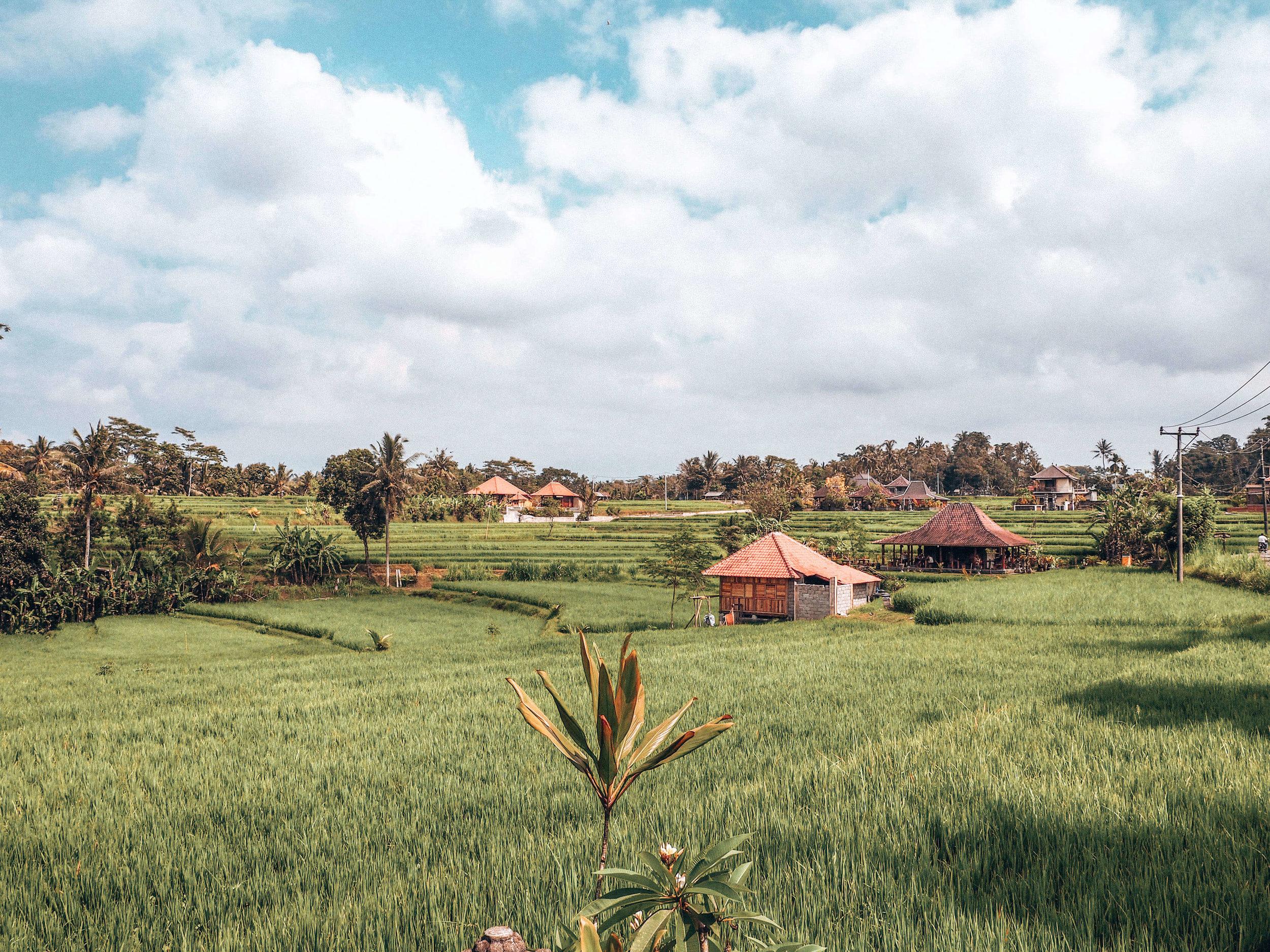 Bali Rice Fields    ouiwegirl.com