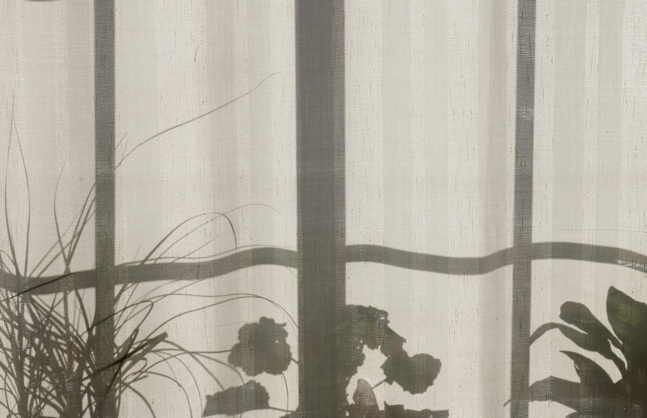 Shadow Work, Plants, Sunshine