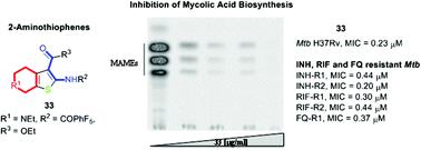 Aminothiophenes with potent anti- Mtb  Activity