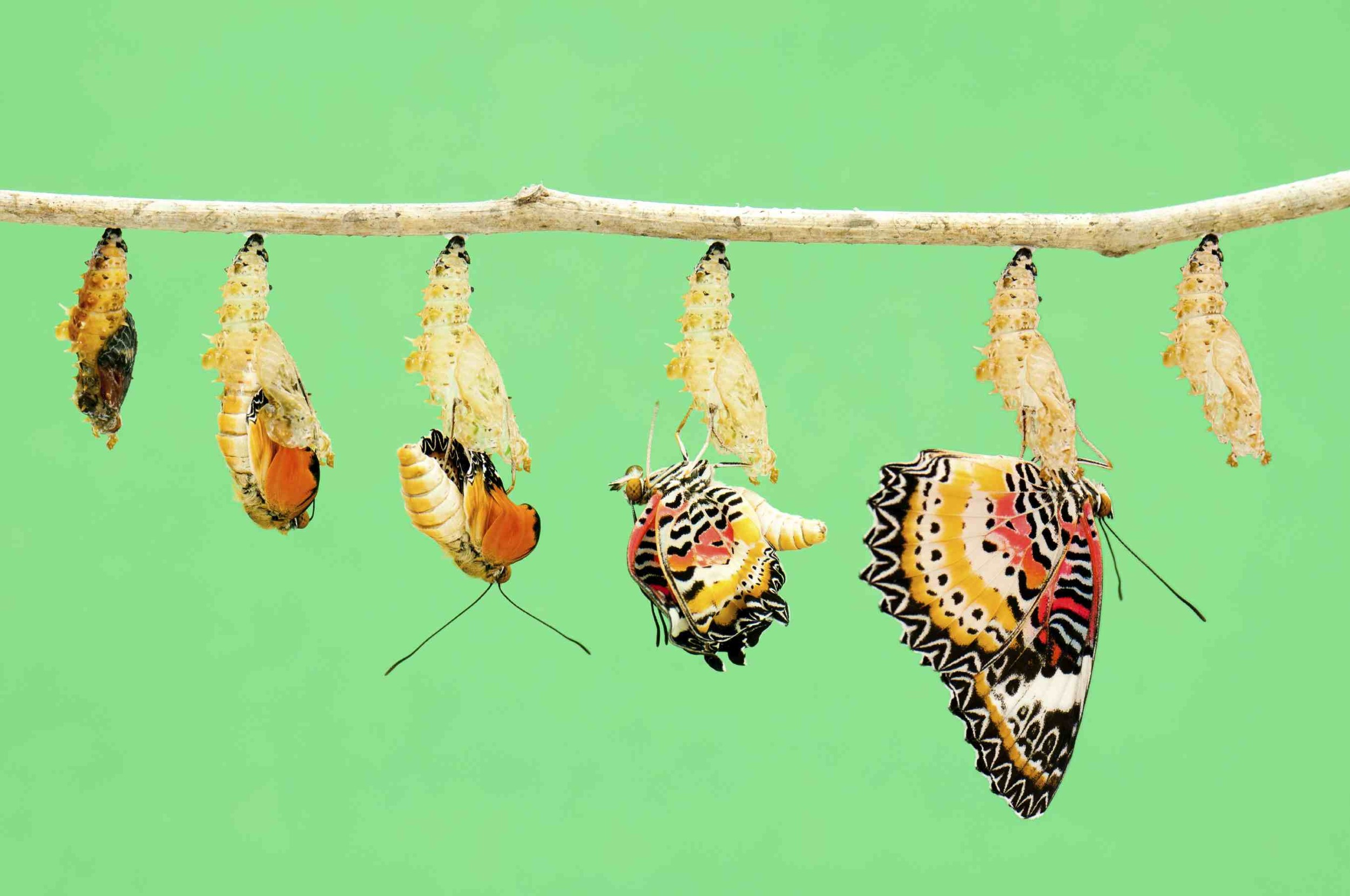 transitioncoaching