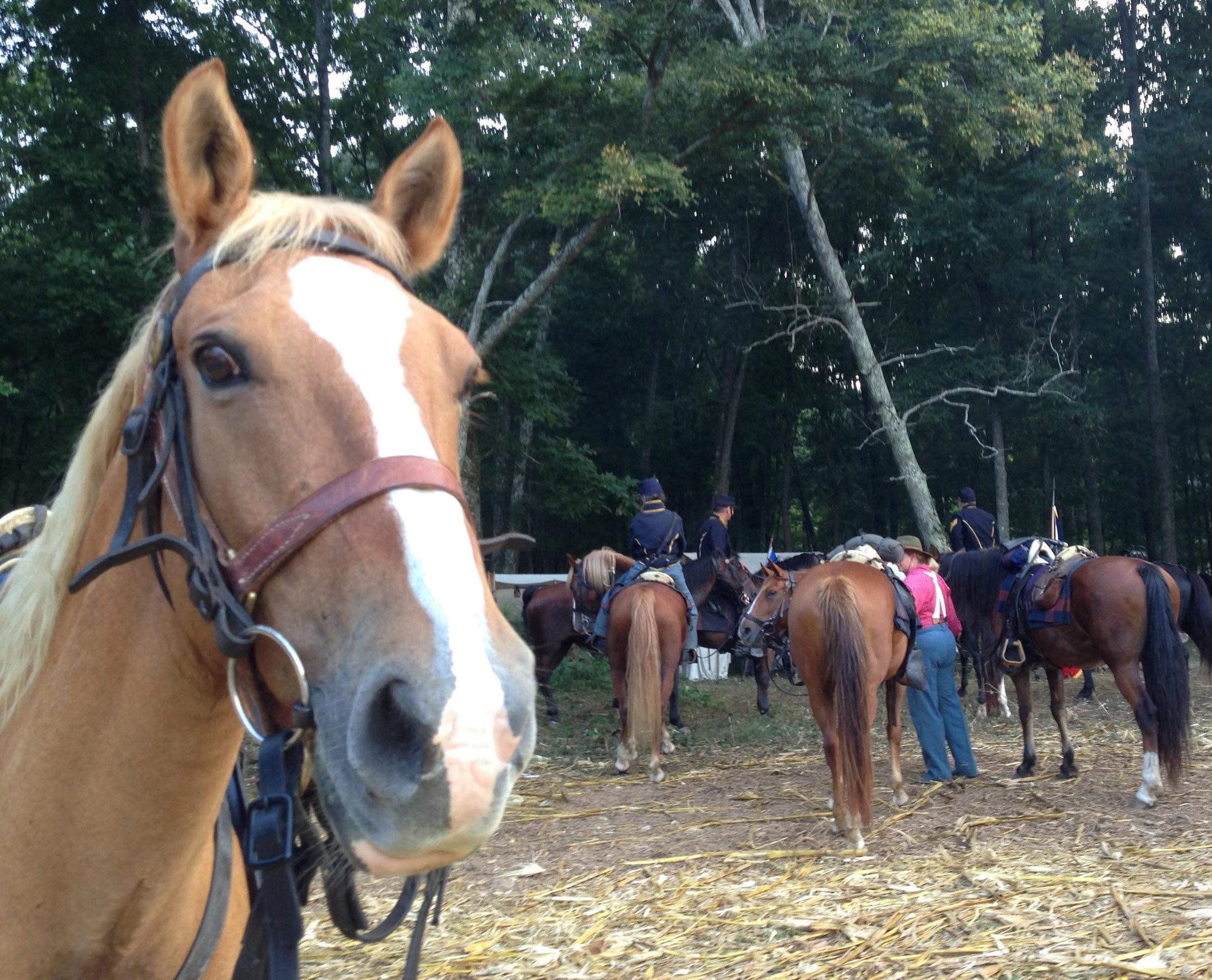 Junior, Appendix Quarter Horse gelding