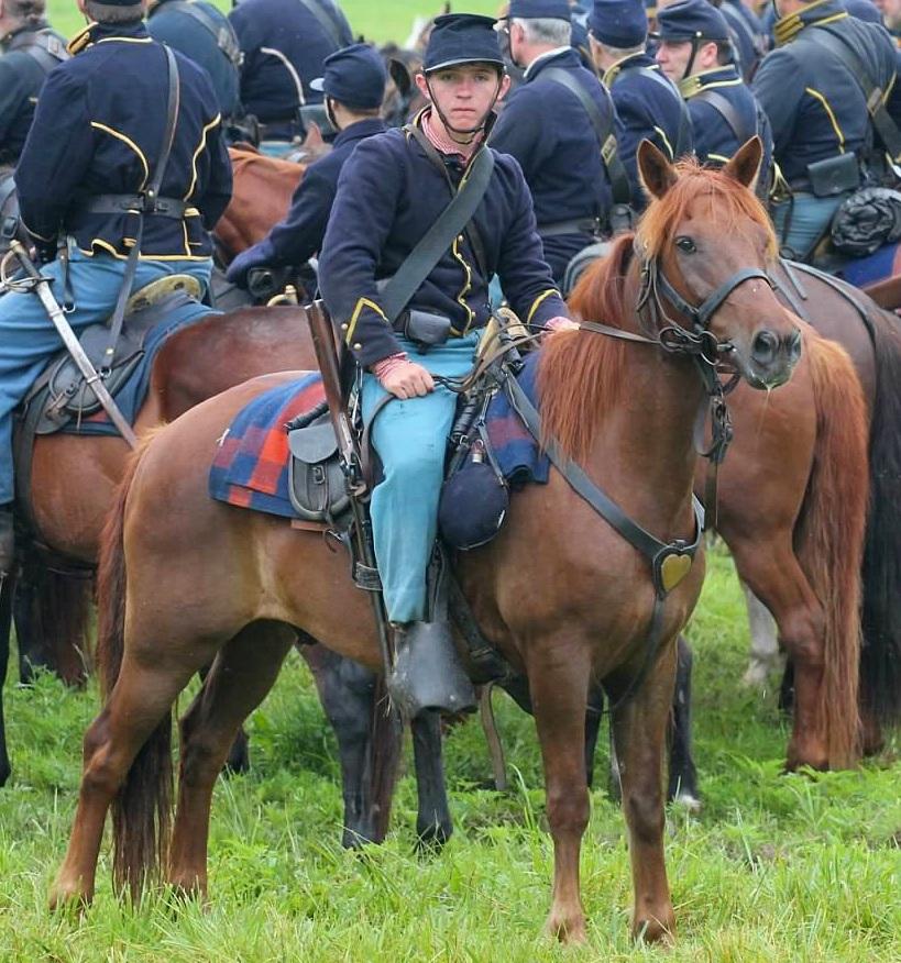 Finn, Chincoteague Pony gelding