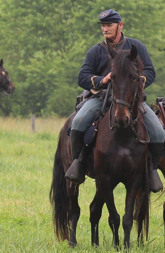 Savannah, TWH mare