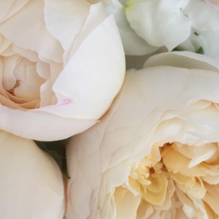The Flower Deli