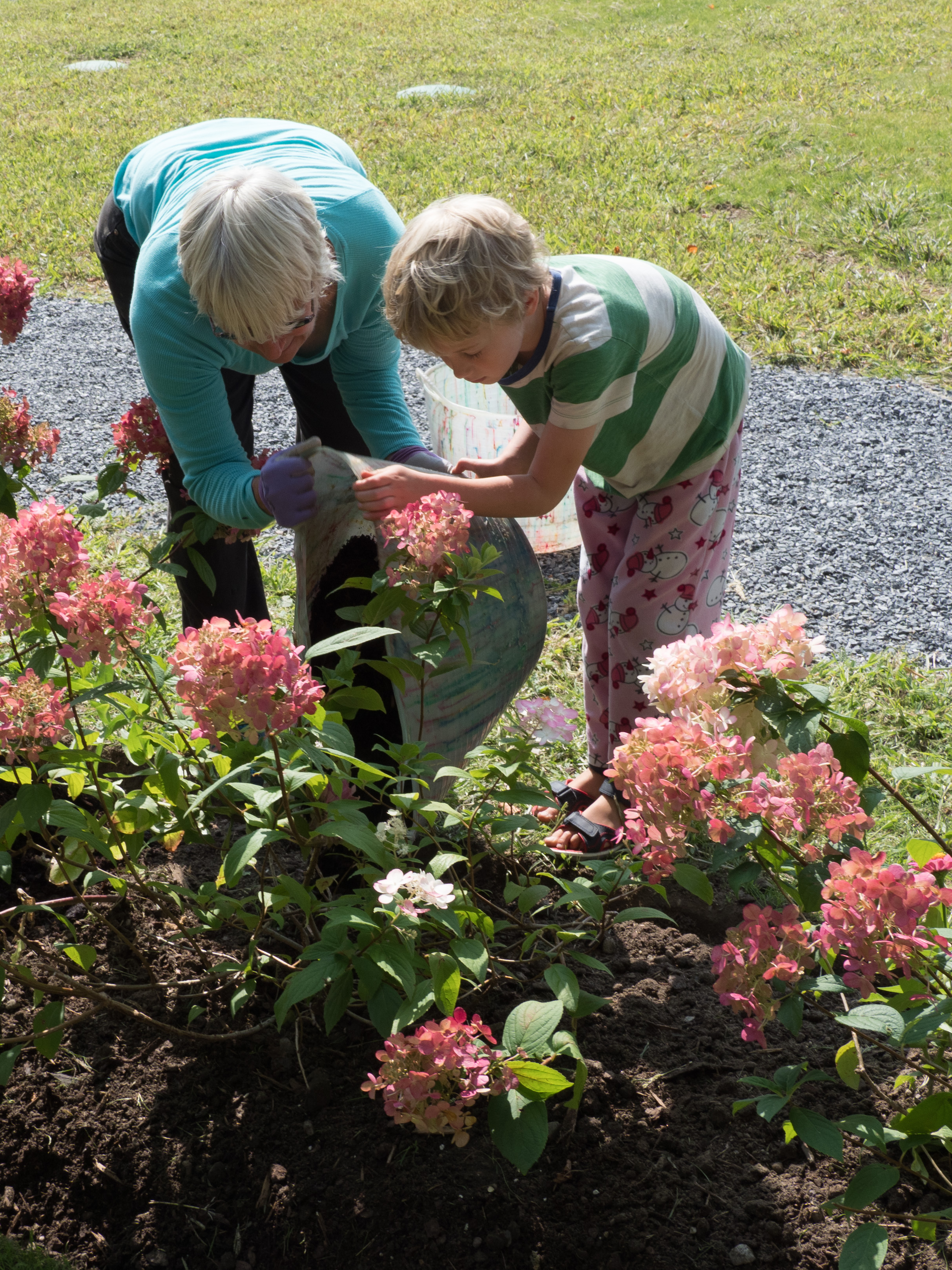 Mulching the flowering plants that line the path.