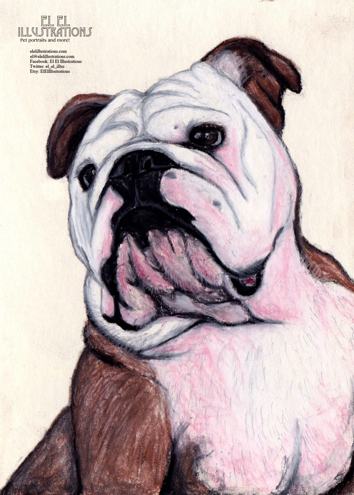 bulldog_scarlett_wm.jpg