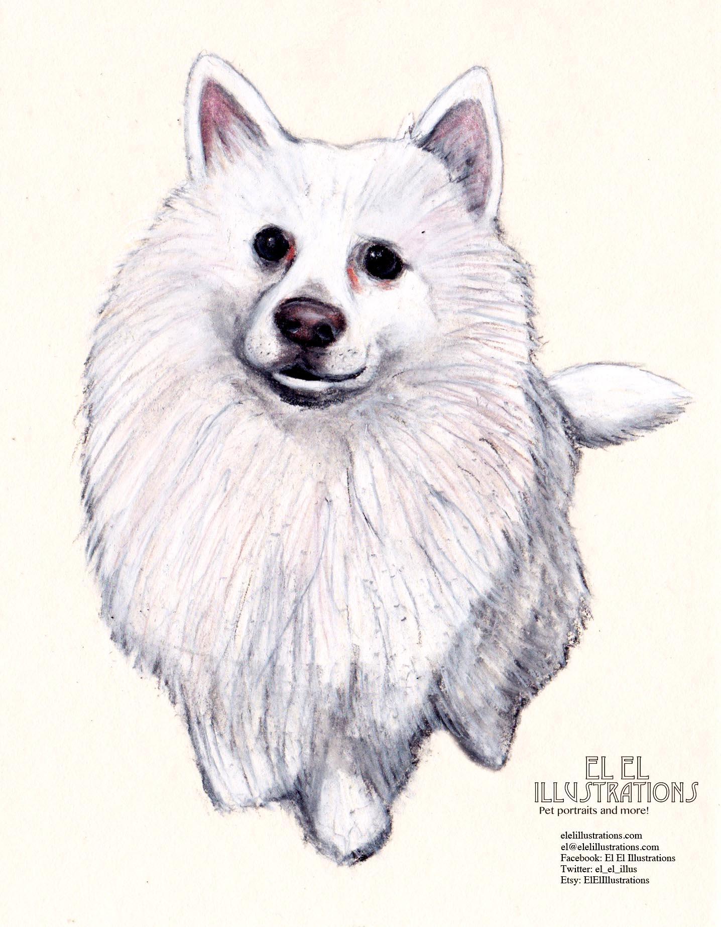 pocky_dog_wm.jpg