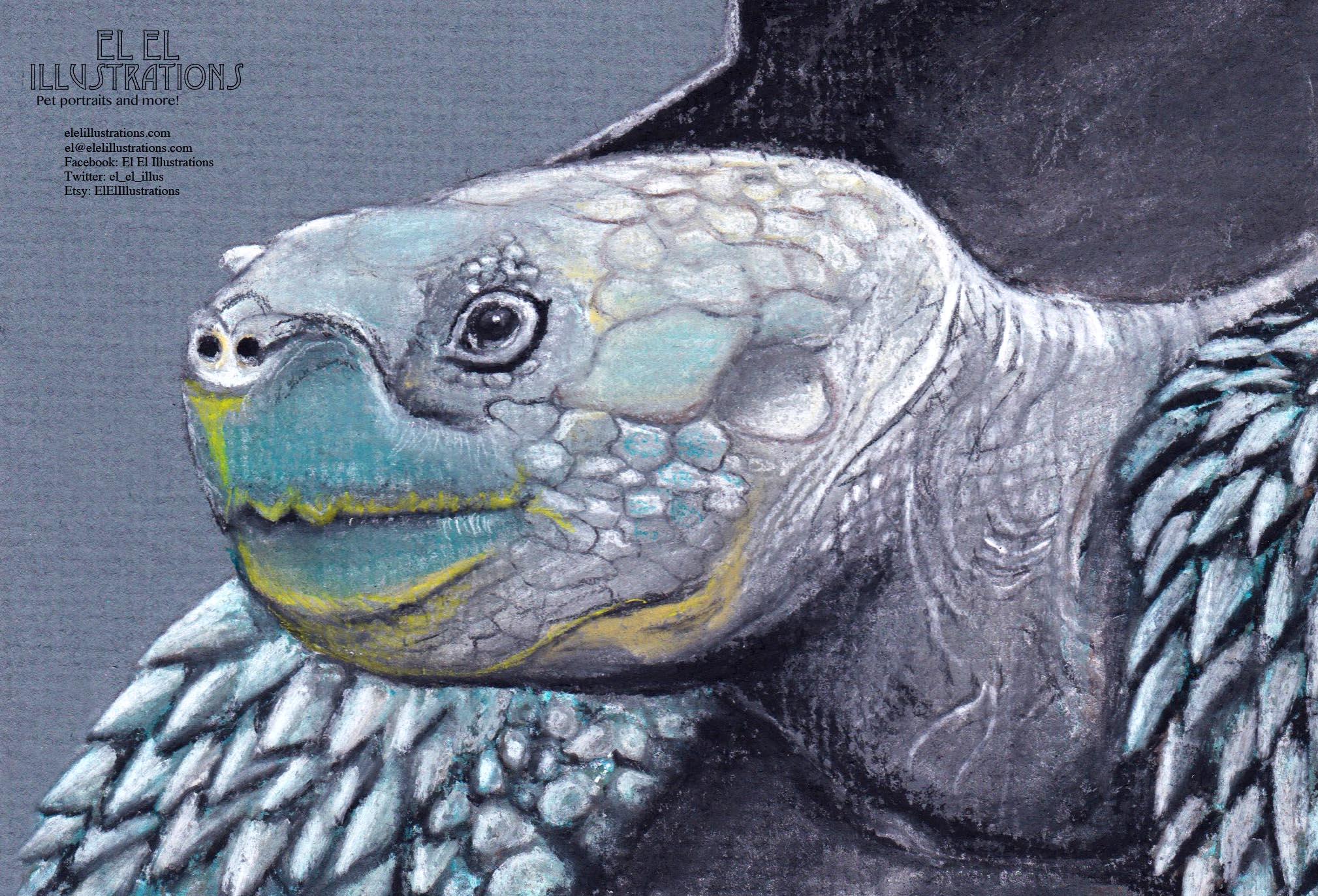 tortoise_wm.jpg
