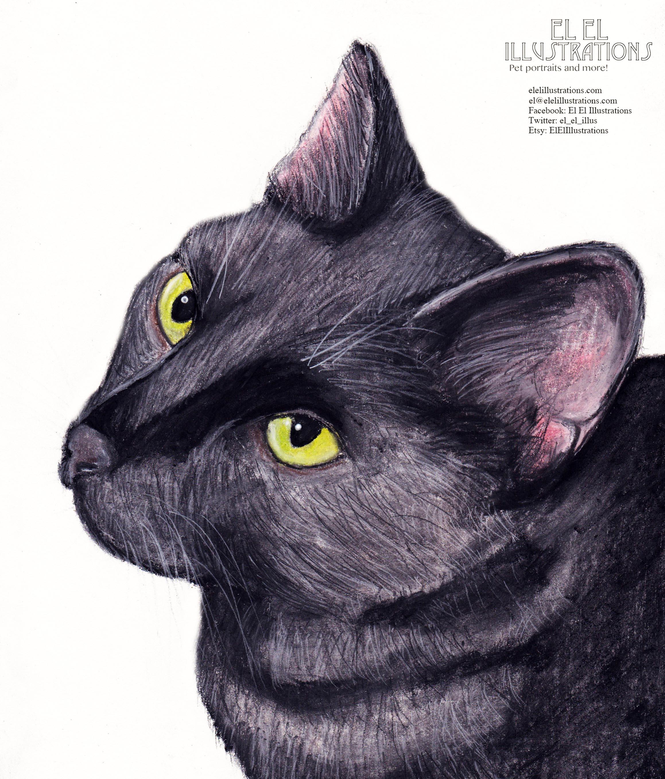 nesta_cat_wm.jpg