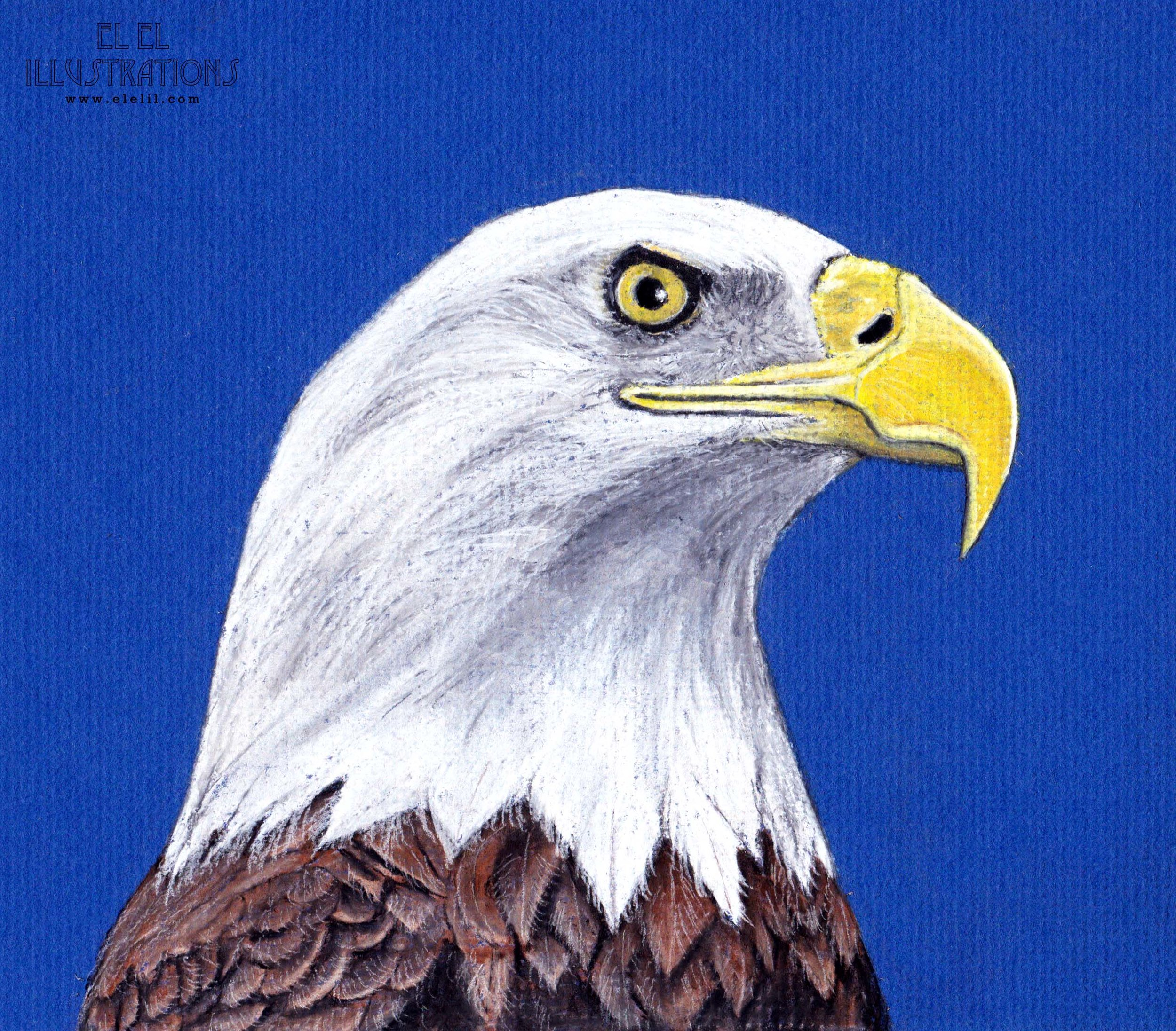 bird_baldeagle_wm.jpg