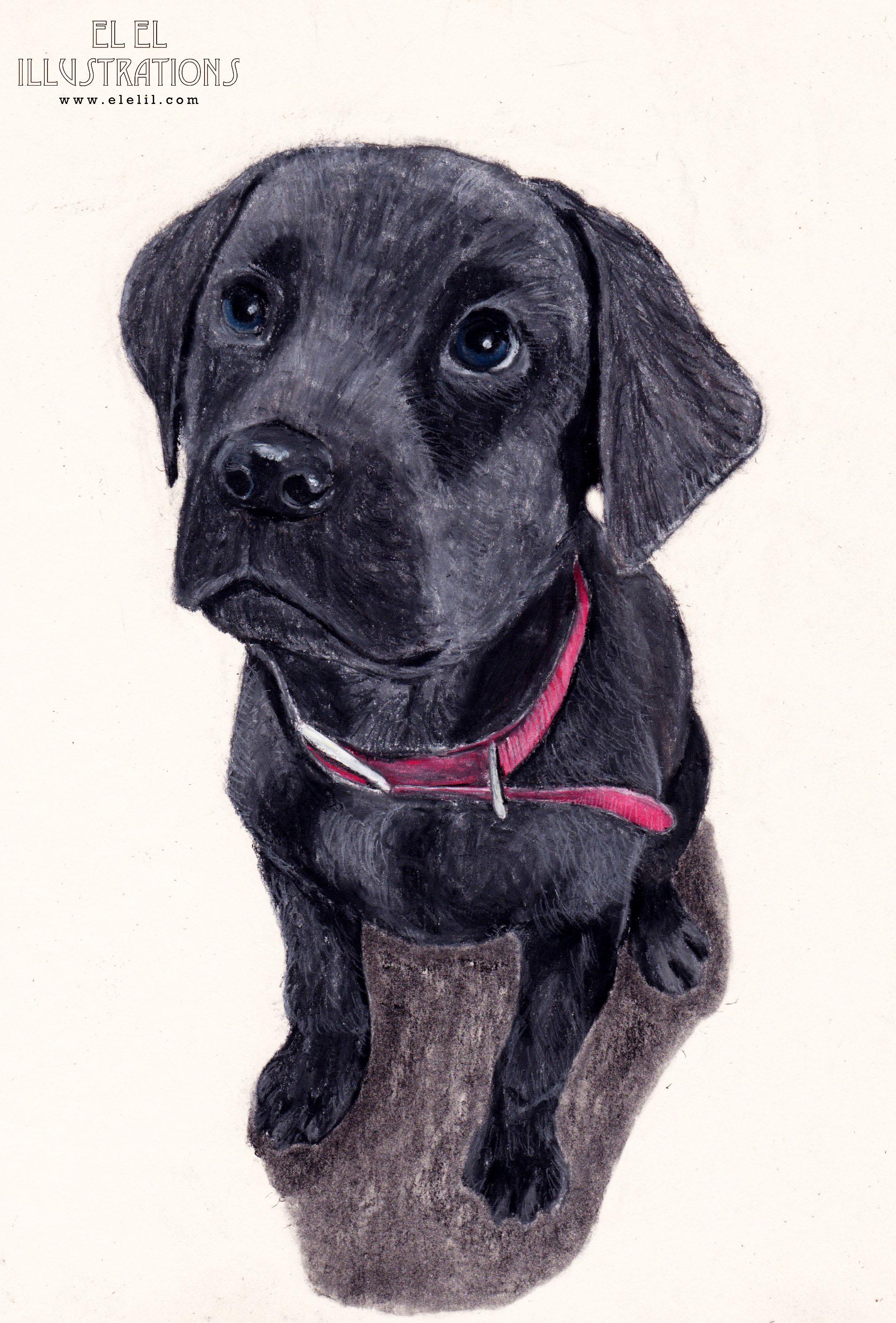 dog_blackpup_wm.jpg