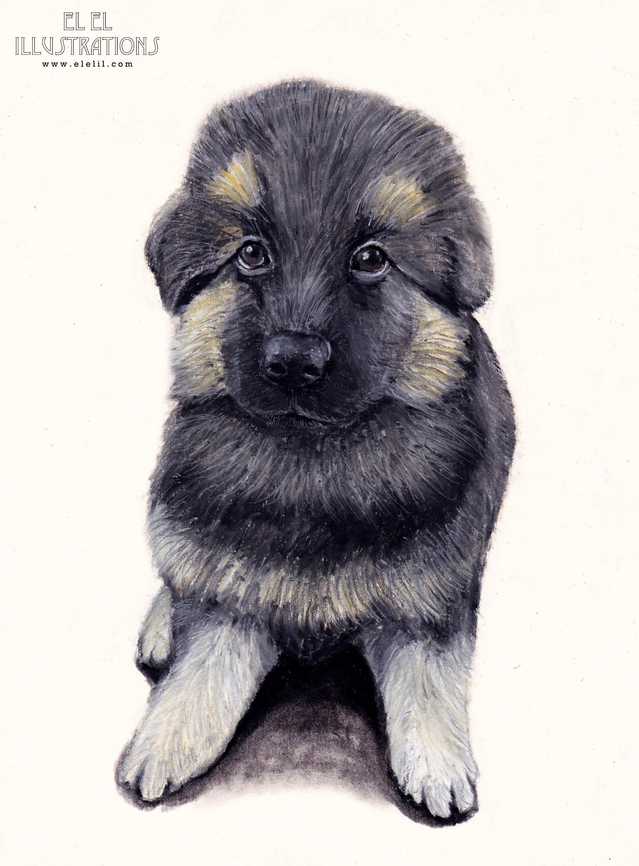 dog_brownpup_wm.jpg
