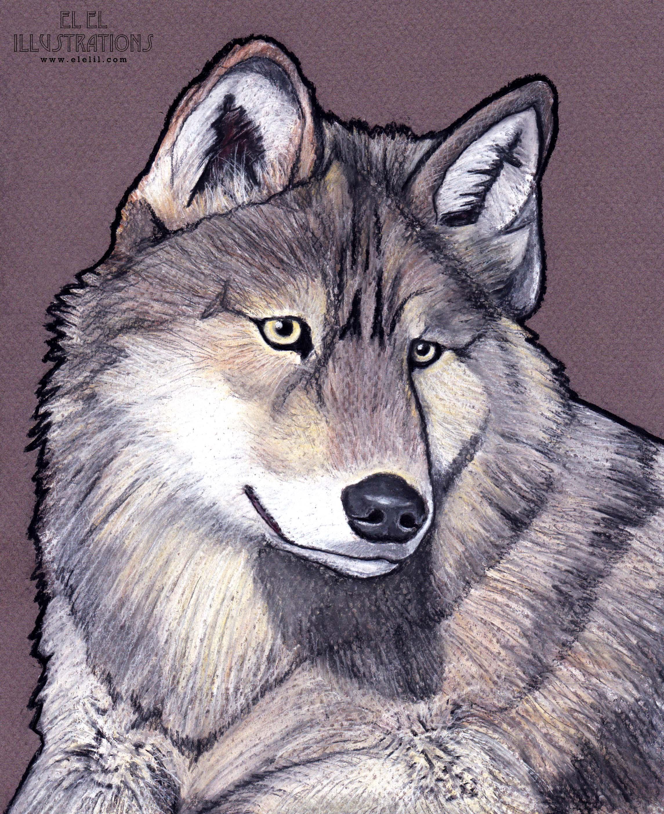 dog_wolf_wm.jpg