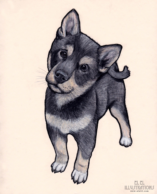 dog_oliver_wm.jpg