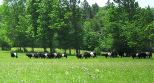 on_pasture_in_july.png